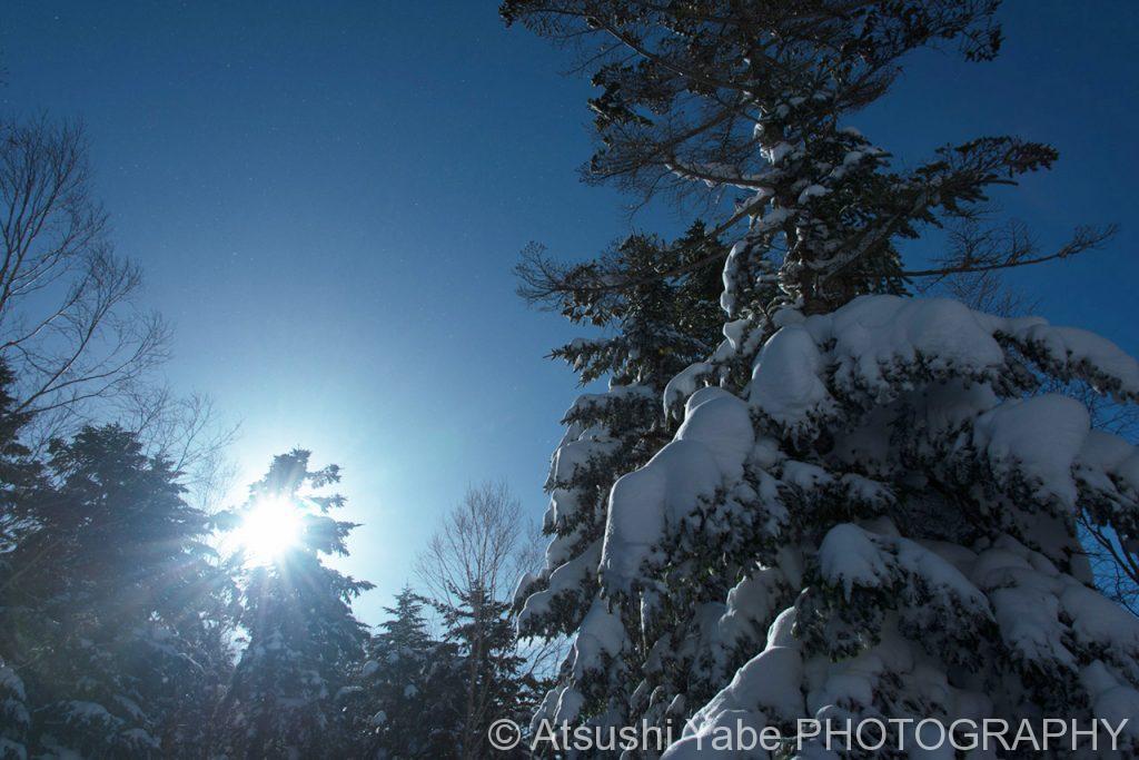 樹氷から差し込む日差し