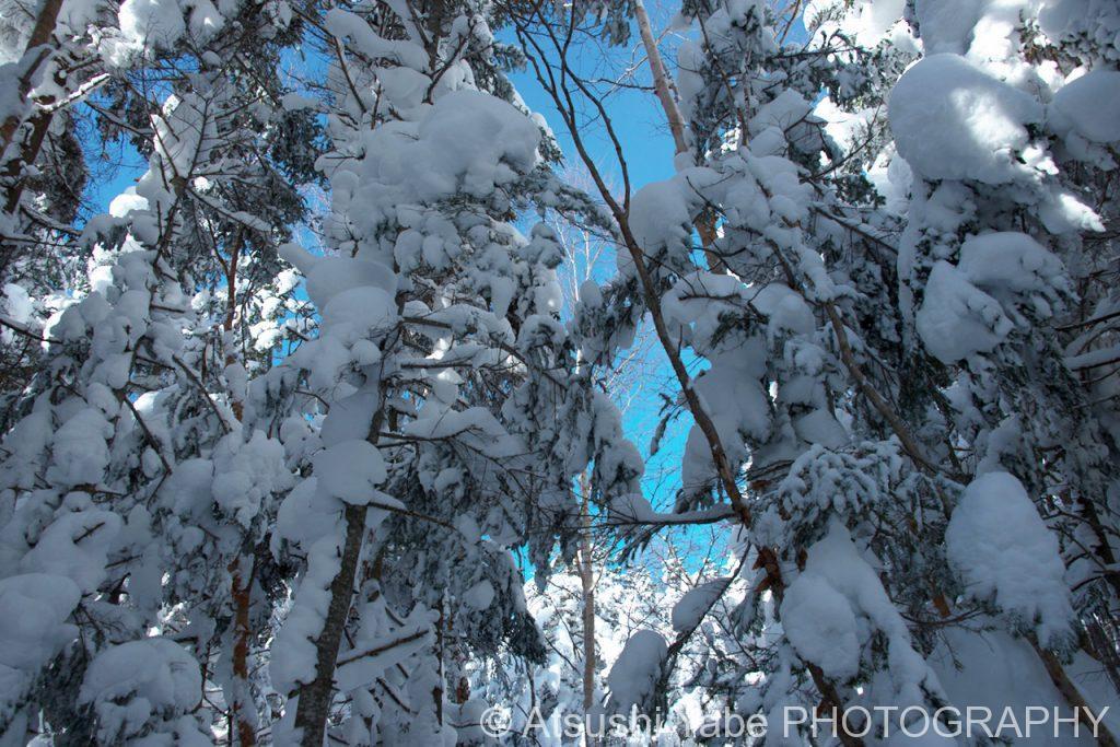 樹氷の中から・・・