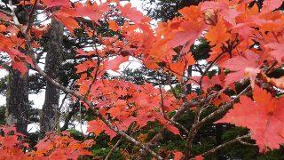 黒戸尾根の紅葉
