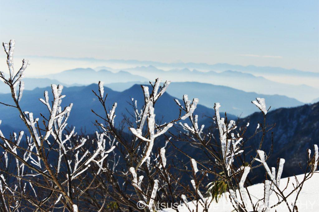 雪が積もった枝を眺めながら