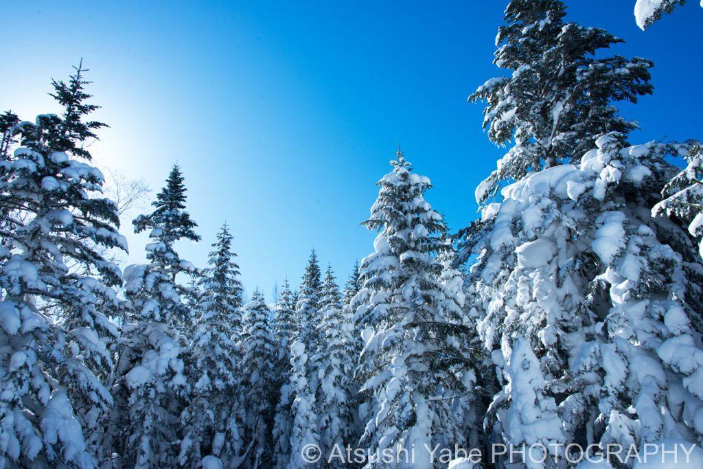 晴れ渡る青空と樹氷