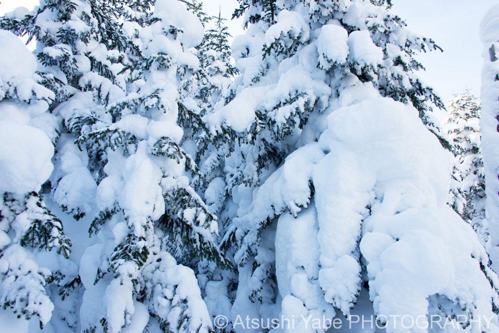 ずっしりと積もった雪